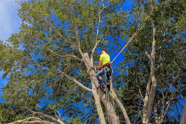 man using chainsaw trimming tree branches