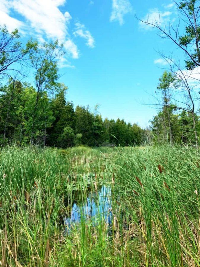the ridges sanctuary ecosystem