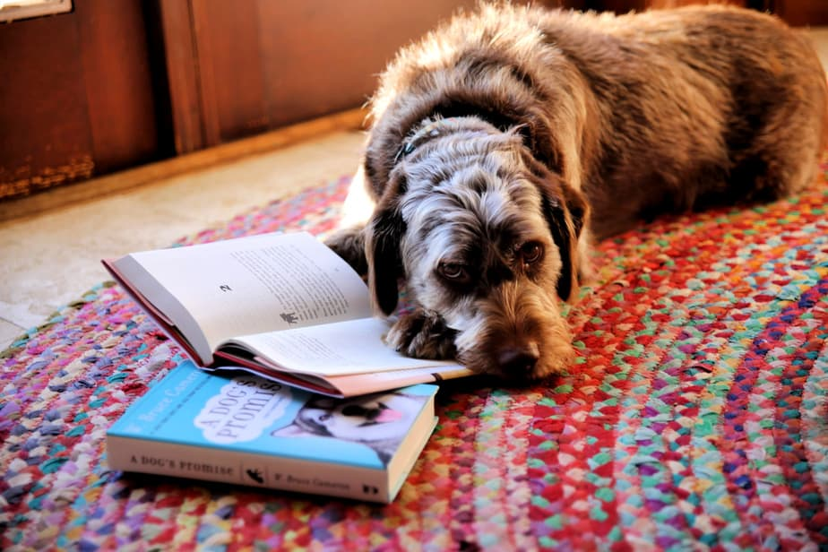 brown rescue pup with paw on wbruce cameron books