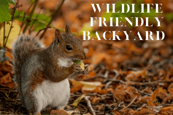 Making a wildlife friendly backyard squirrel eating acorn
