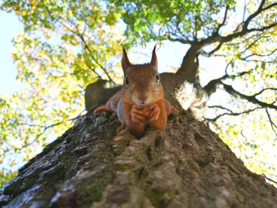 squirrel face close up