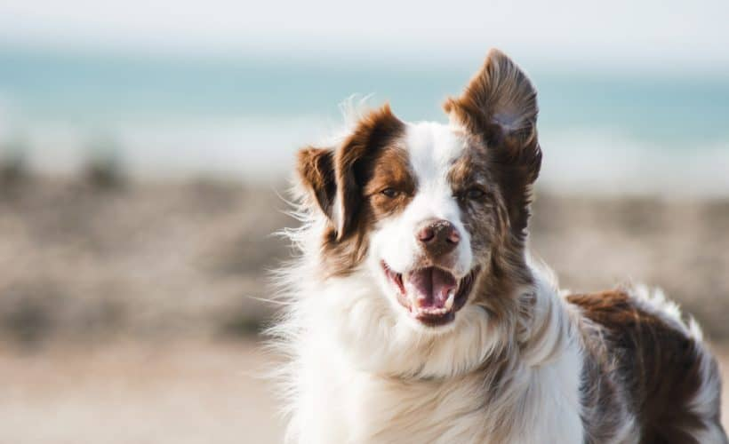 How To Approach Any Dog Safely And The Importance Of Training- ways to approach all kinds of dog as well as why you should train your own.