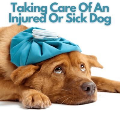 Taking Care Of An Injured Or Sick Dog