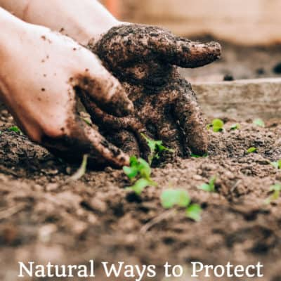 close up hands digging in garden soil with text overlay