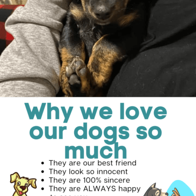 Why We Love Our Dogs So Much