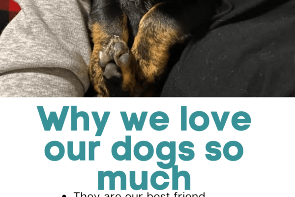 sleeping puppy on lap with list of reasons why we love our dogs so much