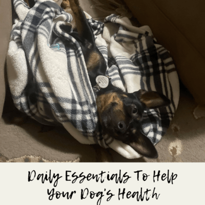 Daily Essentials To Help Your Dog's Health